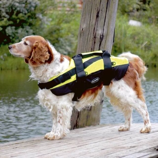 Professional Dog Lifejacket Hydrotherapy